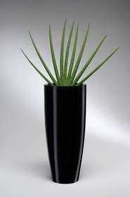 Vaso Conico nero con sanseveria cilindrica
