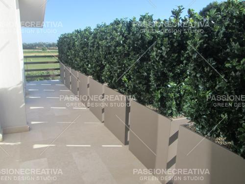 Barriera_Osmanthus_artificiale