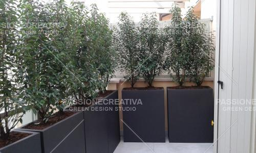 Privacy_in_balcone_con_prunus_lusitanica_2