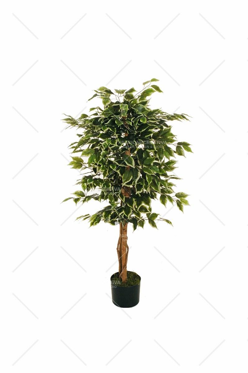 Come Riprodurre Il Ficus Benjamin ficus benjamin 630 foglie h 120 cm., 2 trunks & 2 lianas in